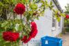 Mehrgenerationenhaus mit einer freien Wohnung 5km zum Ostseestrand - Rosen