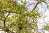 Einfamilienhaus ca. 145m² 5 Zimmer auf ca. 814m² Grundstück in 23749 Grube - Obstbäume